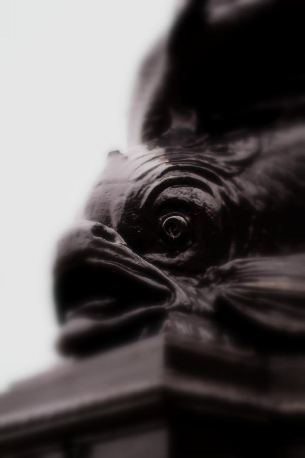 Fish Photograph - Fish Eye by Jacqui Collett
