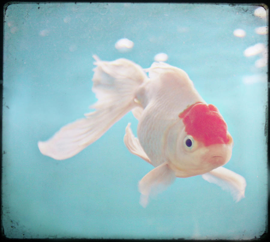 Horizontal Photograph - Fish In The Sea by photo by Anna Theodora
