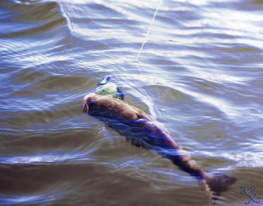 Angler Photograph - Fish In The Water by Kelly Rader