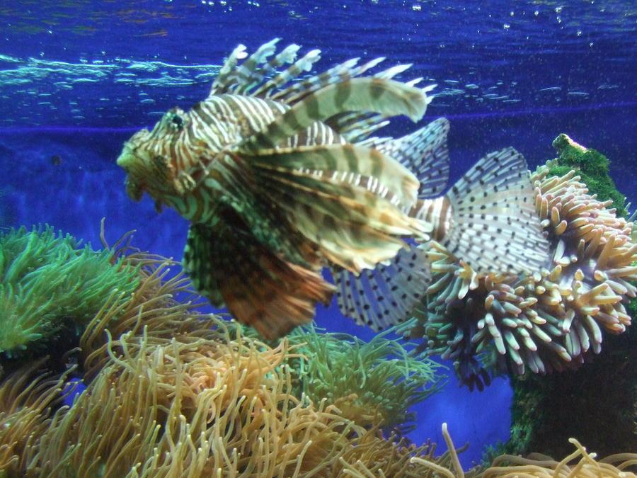 Fish Pyrography - Fish by King Ify