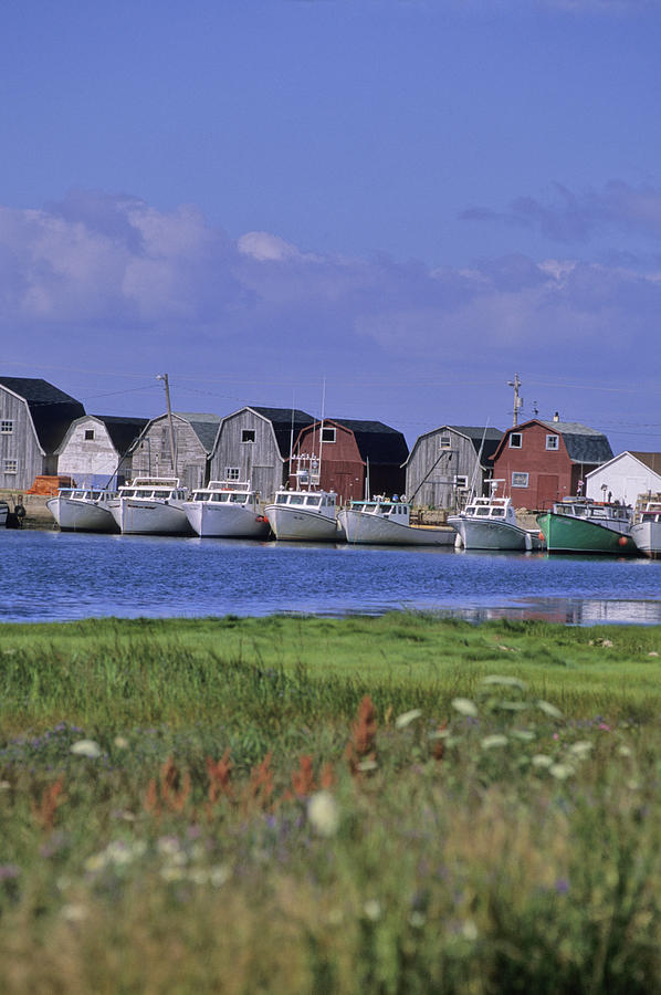 Light Photograph - Fishing Shacks Line The Bay At Malpeque by Leanna Rathkelly