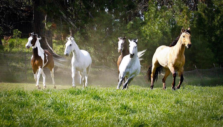 Five Horses Running Photograph By Steve Mckinzie