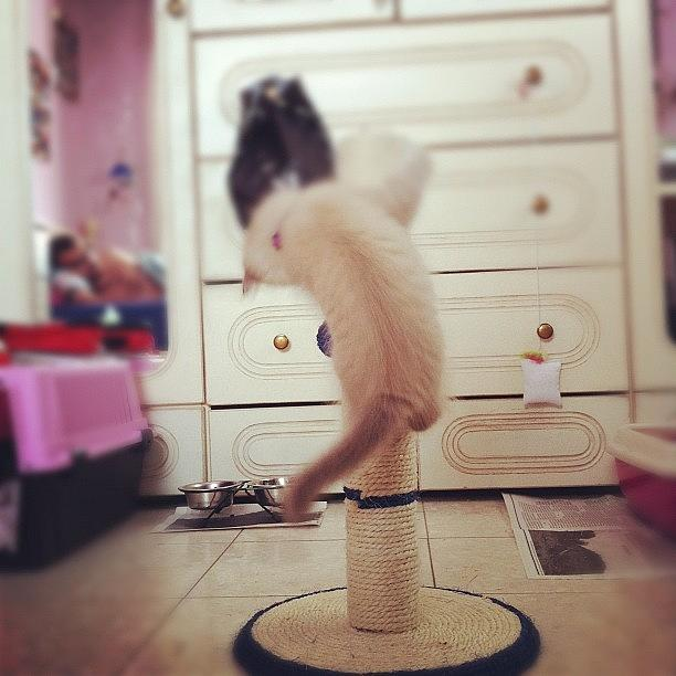 Israel Photograph - Flaaffy Playing Time #flaaffy #pinky by May Pinky  ✨