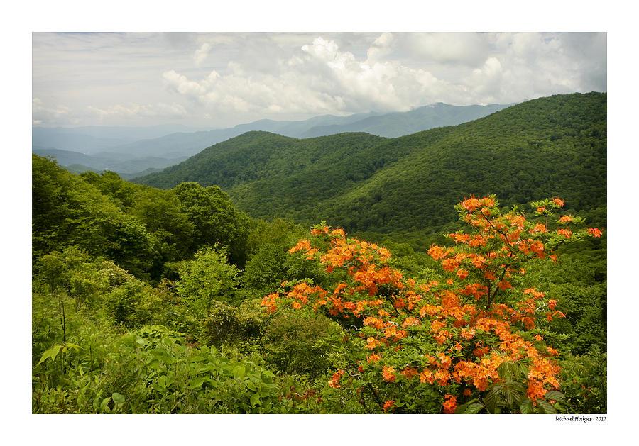 Mountains Photograph - Flame Azalea by Michael Hodges