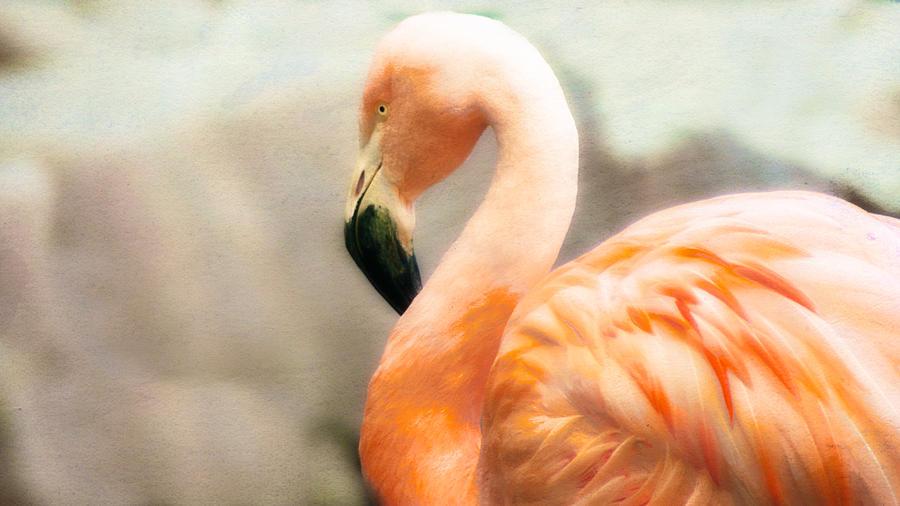 Flamingo Photograph - Flamingo  by Kathryn Potempski