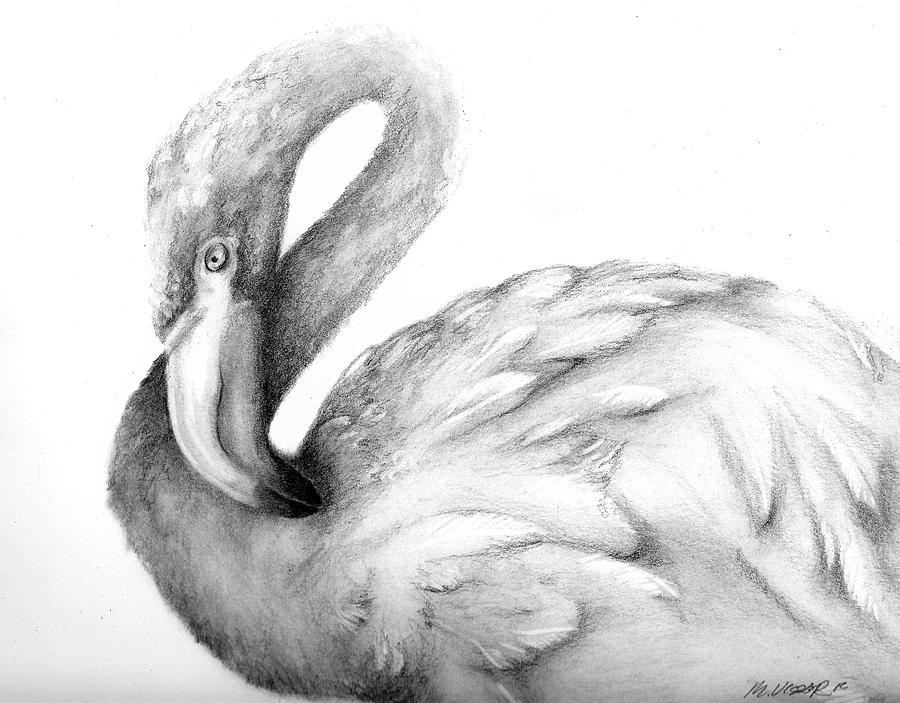 Flamingo Drawing By Meagan Visser