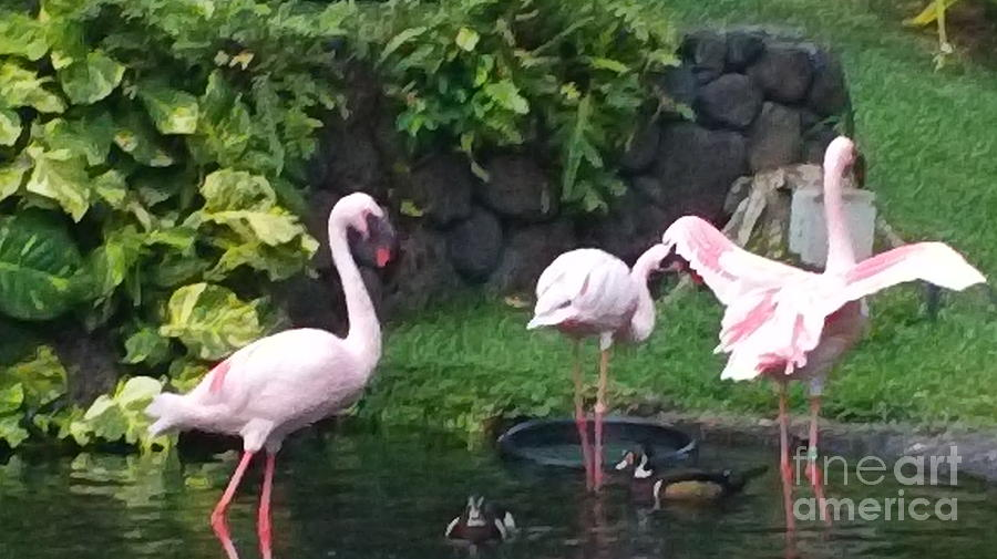 Birds Photograph - Flamingo Party by Silvie Kendall