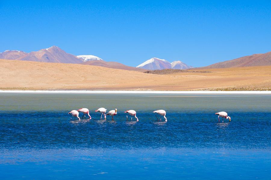 Horizontal Photograph - Flamingos At Lake by Werner Büchel