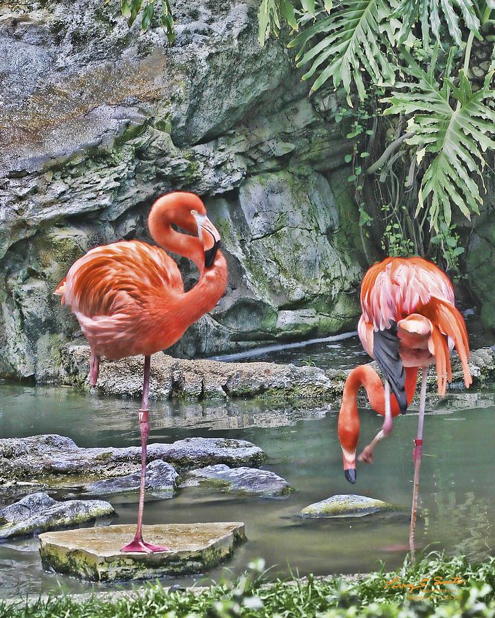 Flamingos IMG 2897 Photograph by Torrey E Smith