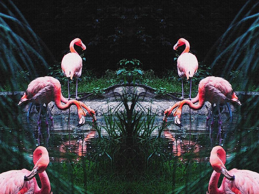 Flamingos Photograph - Flamingos by Jesus Nicolas Castanon