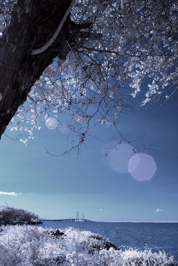 Bridge Photograph - Flaring Sun by Rovi Tavare