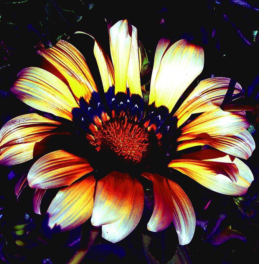 Flower Photograph - Fleur by Jesus Nicolas Castanon
