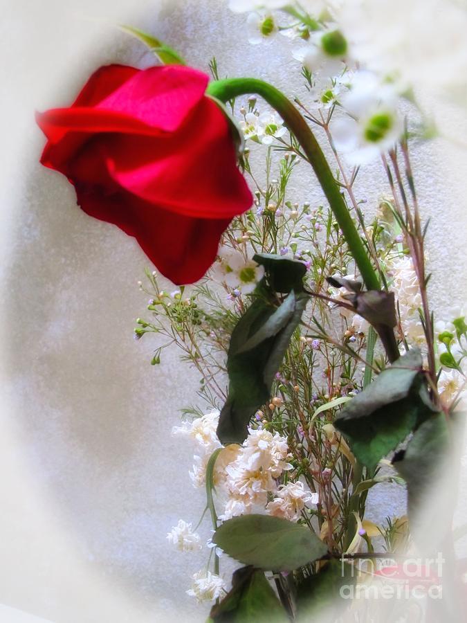 Flower Photograph - Flickering Light by Denise Oldridge