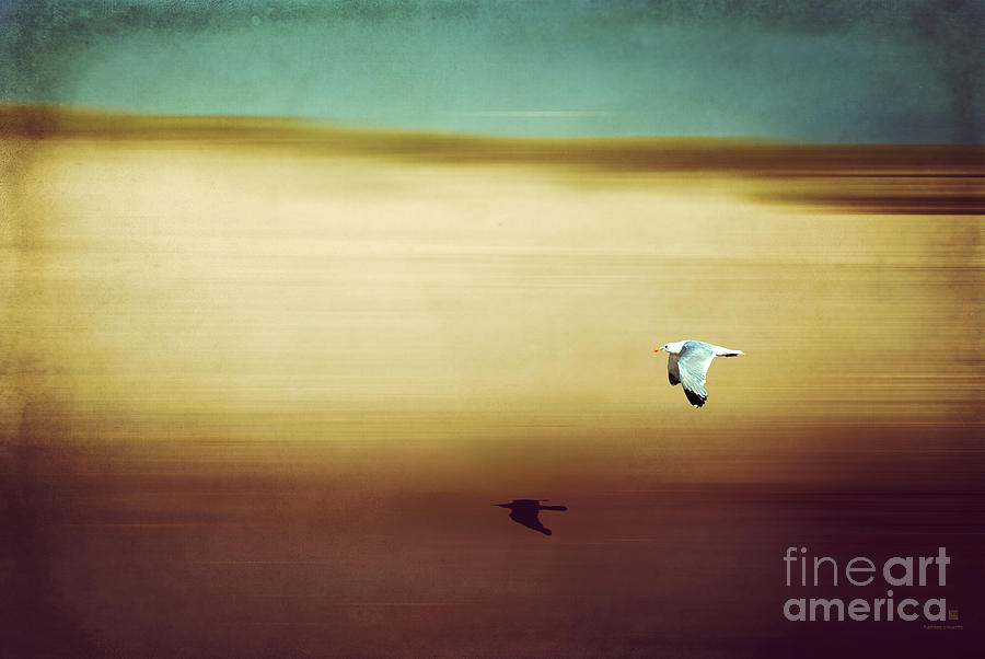 Seagull Photograph - Flight Over The Beach by Hannes Cmarits