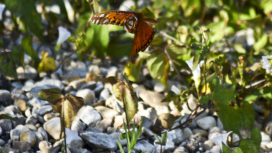 Butterfly Photograph - Flight by Teresa Dixon