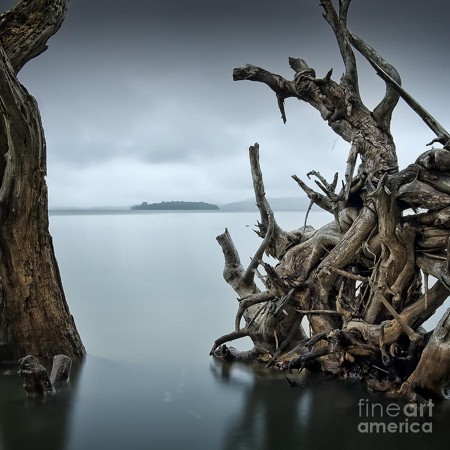 Floating Island Photograph - Floating Island by Michael Howard