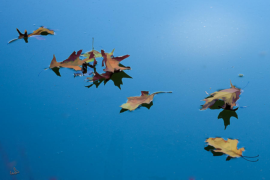 Floating on the sky by Michael Flood
