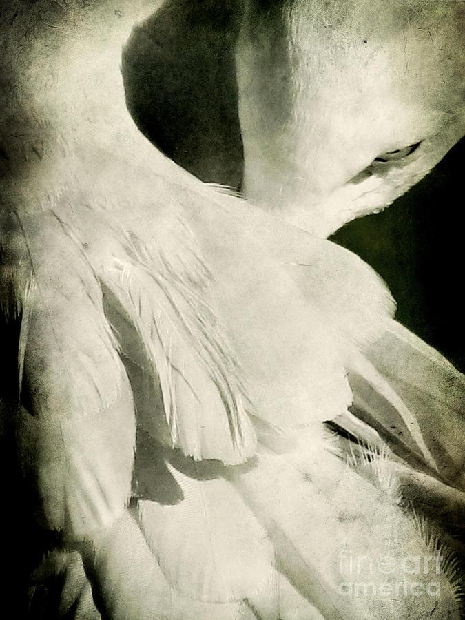 Animal Photograph - Flock by Andrew Paranavitana