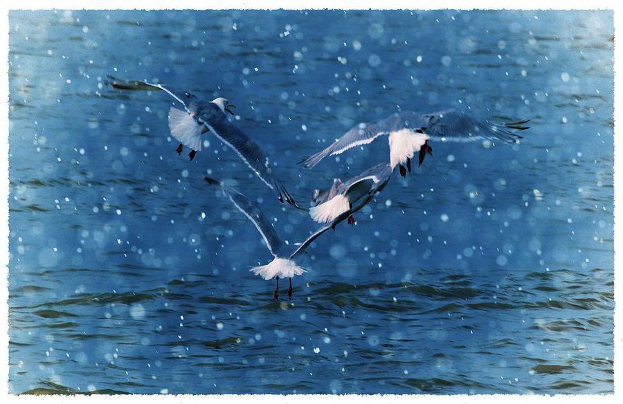Seagulls Photograph - Flock  by Debra  Miller
