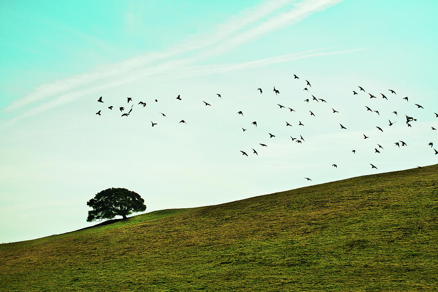 Horizontal Photograph - Flock Of Birds by Where Photography meets Graphic Design.