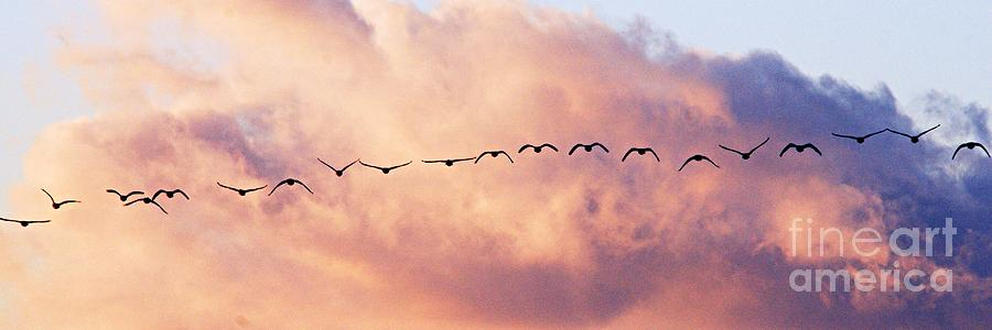 Photography Photograph - Flock Of Geese At Sunset by Larry Ricker