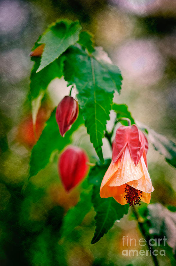 Floral Awakening Photograph by Bobbi Feasel