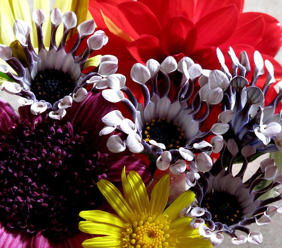 Floral Photograph - Floral Bliss by Monika A Leon