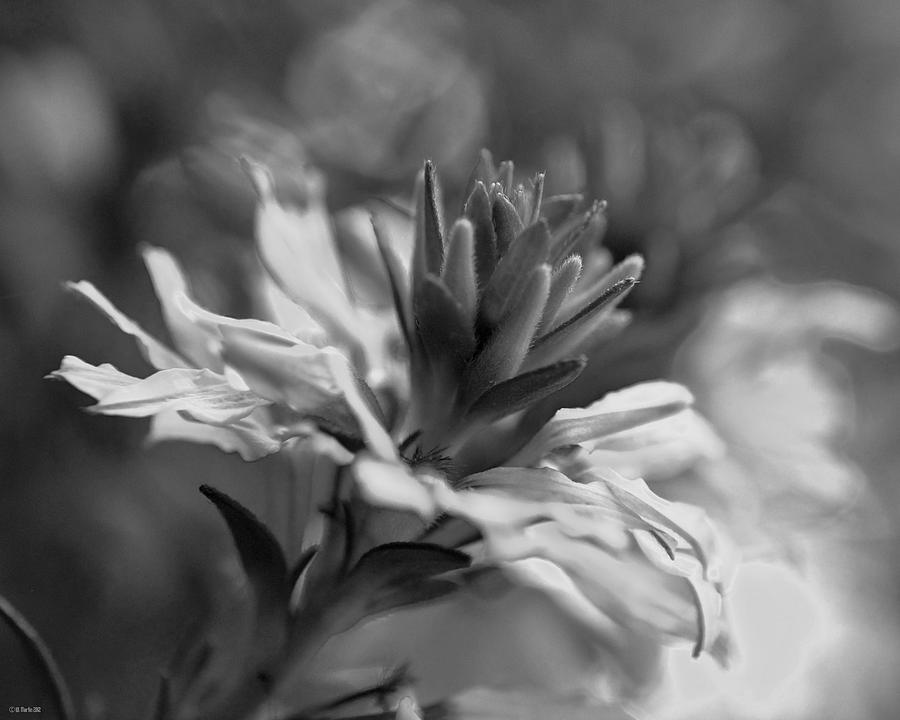 Black And White Photography Photograph - Floral Bloom by William Martin
