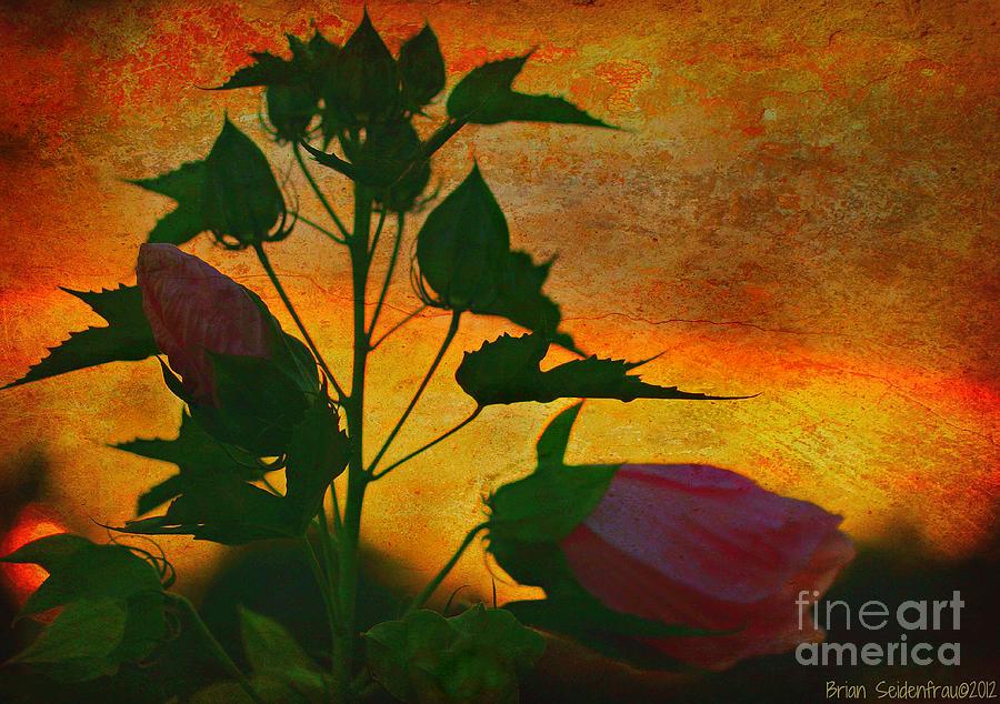 Flowers Photograph - Floral Contrast by Brian  Seidenfrau