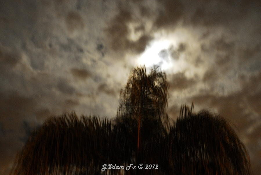 Print Photograph - Florida Night Shadows  by G Adam Orosco