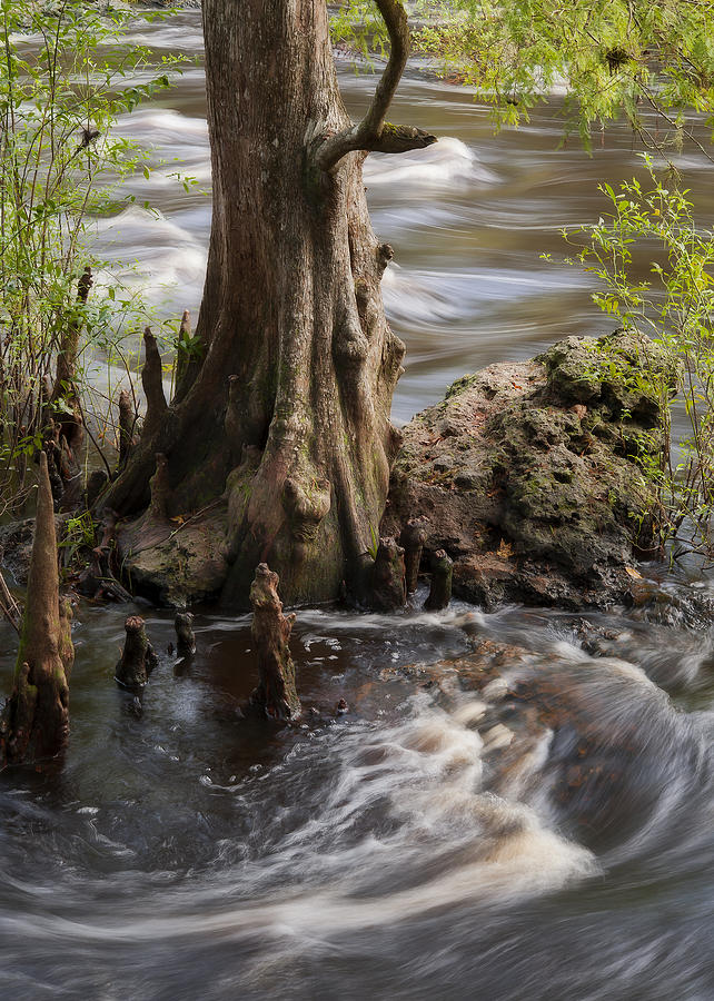 Rapids Photograph - Florida Rapids by Steven Sparks