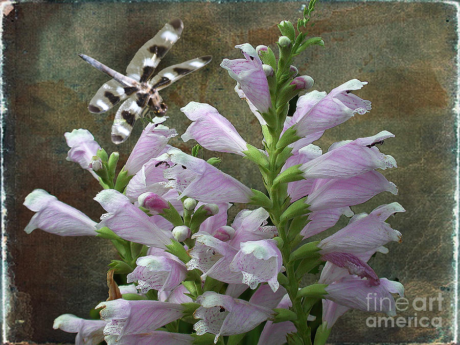 Flowers Photograph - Flower And Dragonfly by Jim Wright