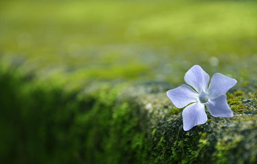 Flower Photograph - Flower by Armando Carlos Ferreira Palhau