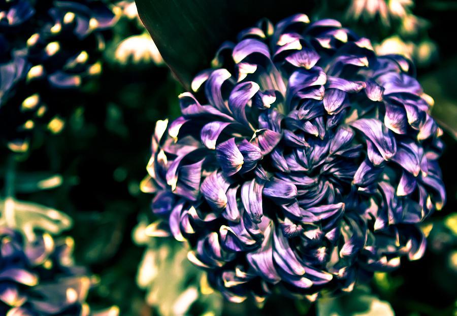 Flower Photograph - Flower Ball by Milan Kalkan