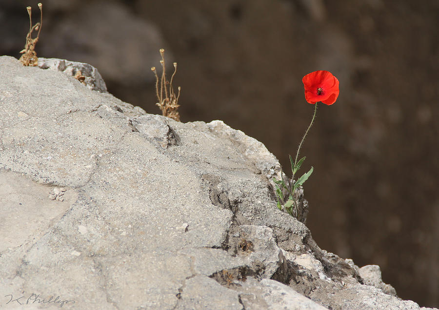 Flower Photograph - Flower By The Pool Of Bethesda - Israel by Jennifer Kathleen Phillips