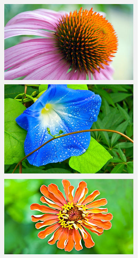 Flowers Photograph - Flower Collage Part Two by Susan Leggett