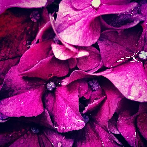 Pink Photograph - #flower #flowers #pink #pretty #nature by Katie Williams