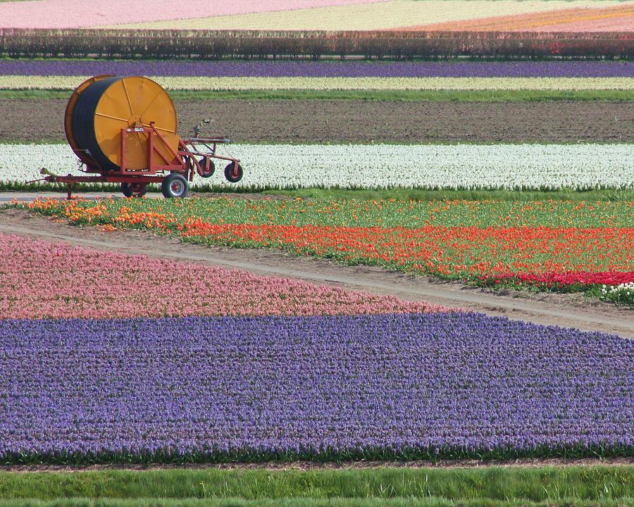 Holland Photograph - Flower Garden by Tia Anderson-Esguerra