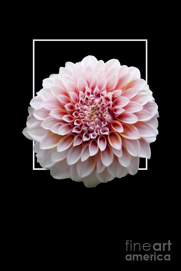 Flower Photograph - Flower in frame -4 by Tad Kanazaki