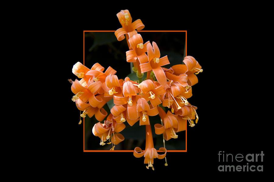 Flower Photograph - Flower in frame -6 by Tad Kanazaki
