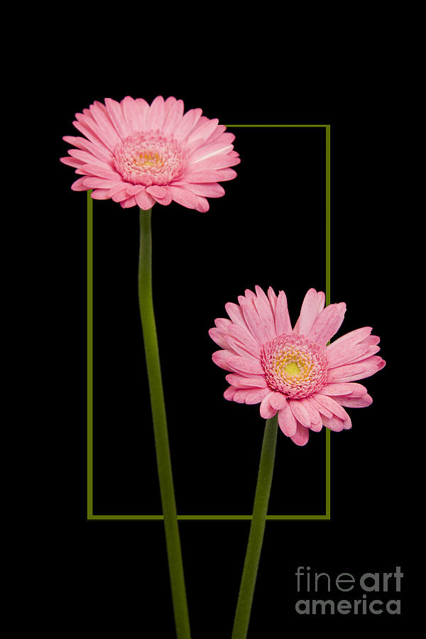 Nature Photograph - Flower in frame -7 by Tad Kanazaki