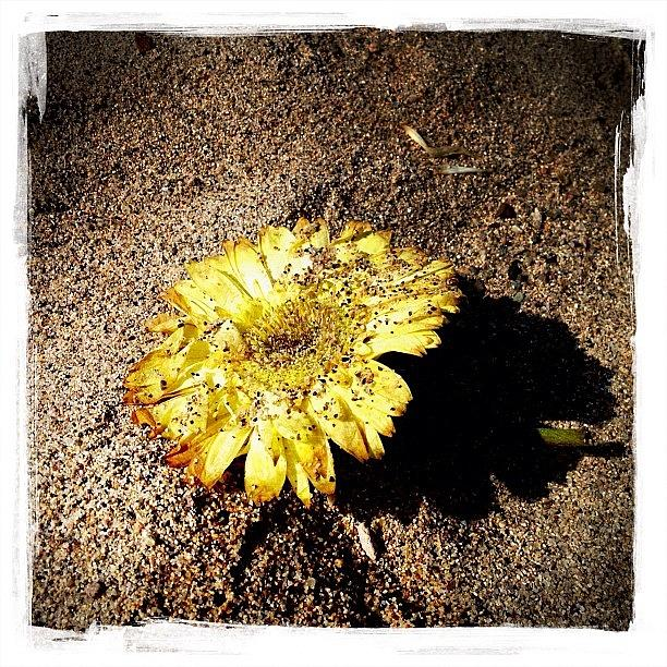 Flower Photograph - Flower In The Sand by Natasha Marco