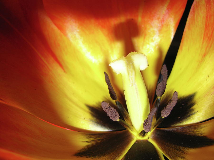 Flower Photograph - Flower Life by Mike Stouffer