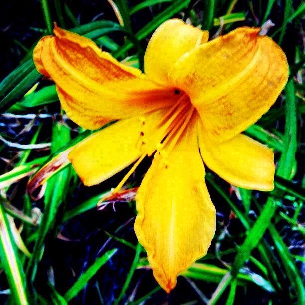 Plant Photograph - #flower #picoftheday #yellow #orange by Katie Williams