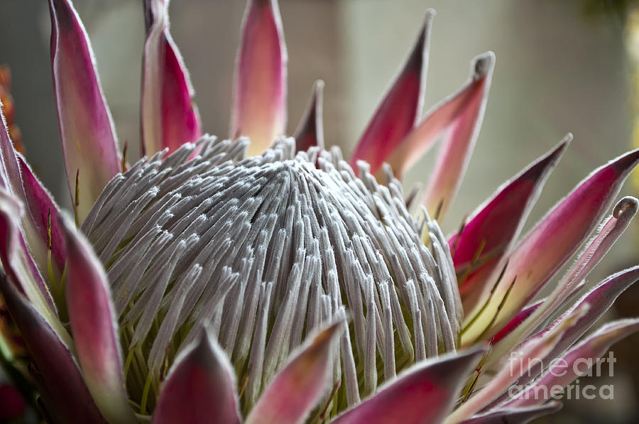 Flower Photograph - Flower Planet by Roberto Bettacchi