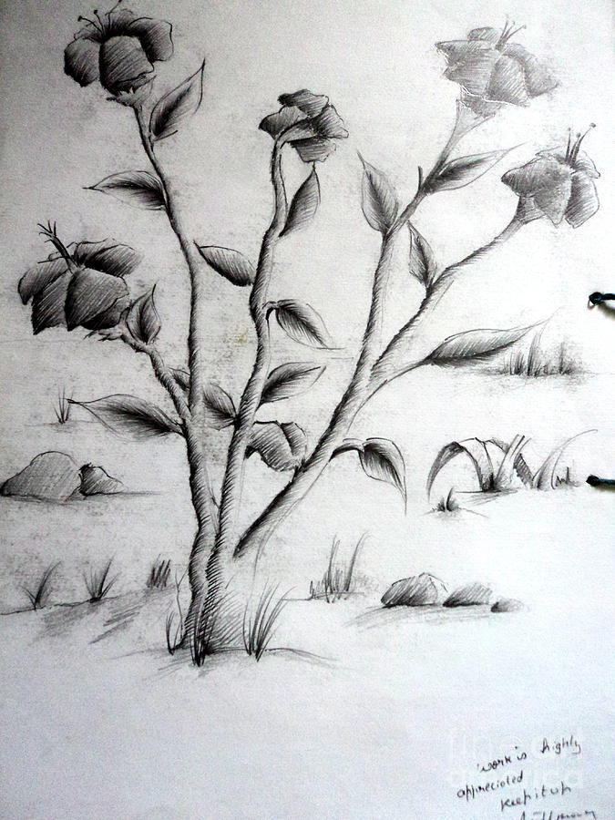 Flowers Drawing - Flower Plant by Tanmay Singh
