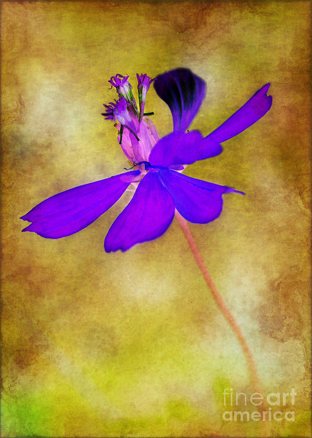 Flower Photograph - Flower Take Flight by Judi Bagwell