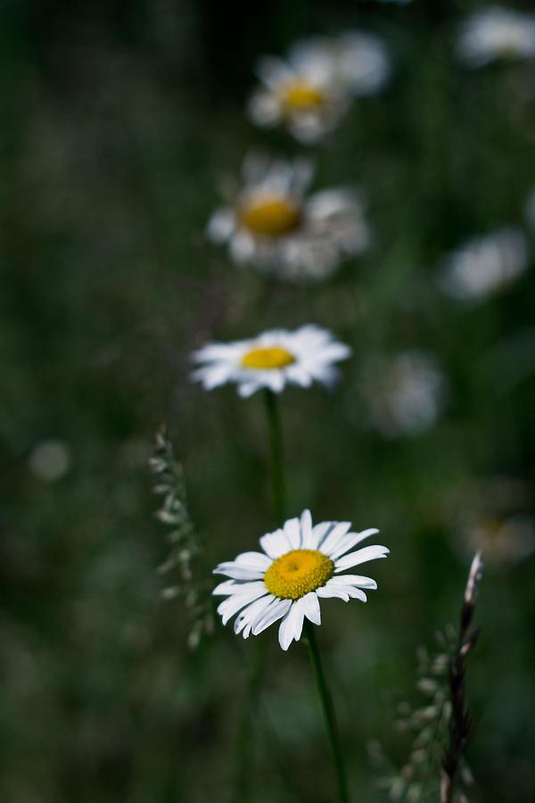 Flower Photograph - Flower Trail by Stephen Thomason