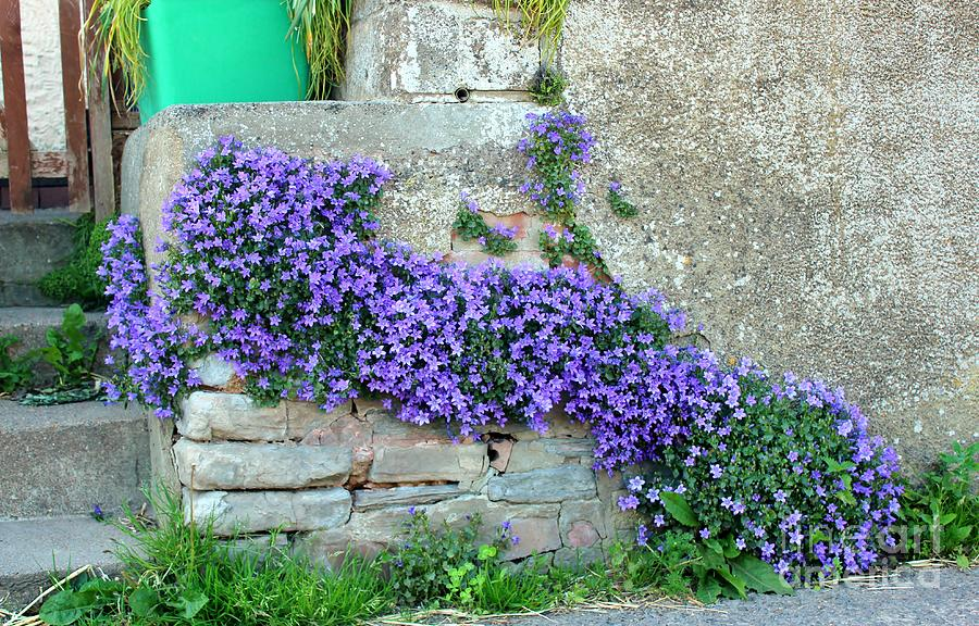 Flowers Photograph - Flowered Steps by Rene Triay Photography
