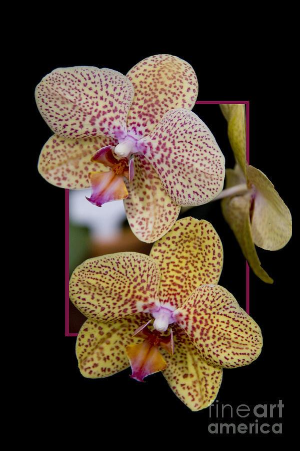 Flower Photograph - Flowerin Frame -8 by Tad Kanazaki